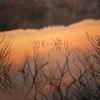 山の夜明け3