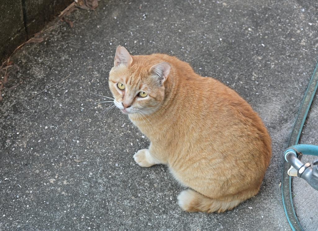 三度の飯よりネコが好き