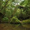 悠久の森にて 4