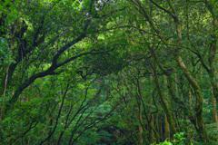 森の中で 13