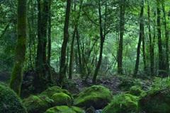 森の中で 10