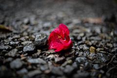 道端の朽ちた花