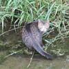 川を歩く猫