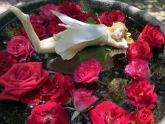 薔薇とお昼寝エンジェル