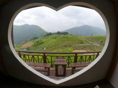 愛が詰まった茶畑