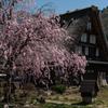 白川郷の春-2