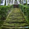 鎌倉 杉本寺苔の階段