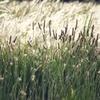 河川敷の野草