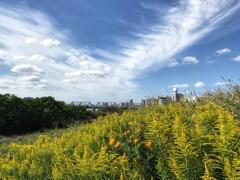 淀川に秋の色がやって来た
