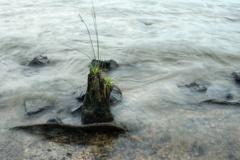 淀川の水辺