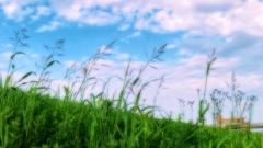 青空に野草