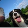 ボーダーコリーのネオと公園で日光浴