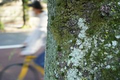 日暮里駅桜並木