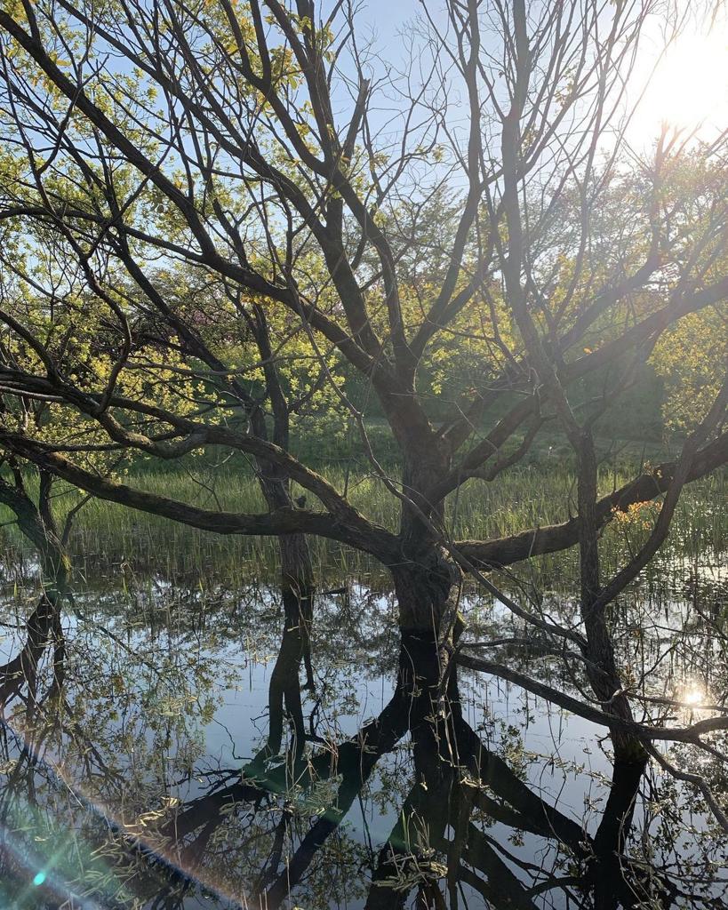 水と光と木と草と陰と。