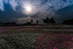 月と芝桜 ①