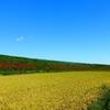 田園の 向こうの斜面の 彼岸花