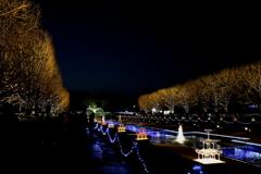 昭和記念公園、イルミネーション。