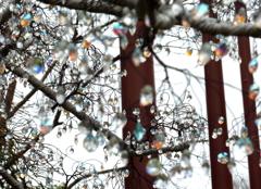 ガラスの樹