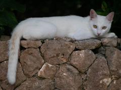 竜宮展望台にいた猫さん
