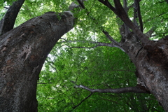 古木の生命力