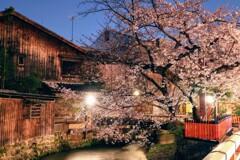 深夜の祇園白川