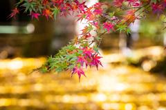 紅葉と黄金絨毯
