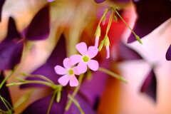 花 柄にもなく2