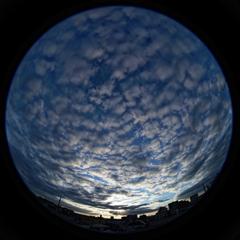 羊雲で埋まった空