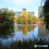 札幌、中島公園の紅葉、黄葉