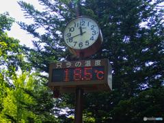 オリンピックが、あと1週間あとだったらなあ。今日の札幌市郊外の気温です。