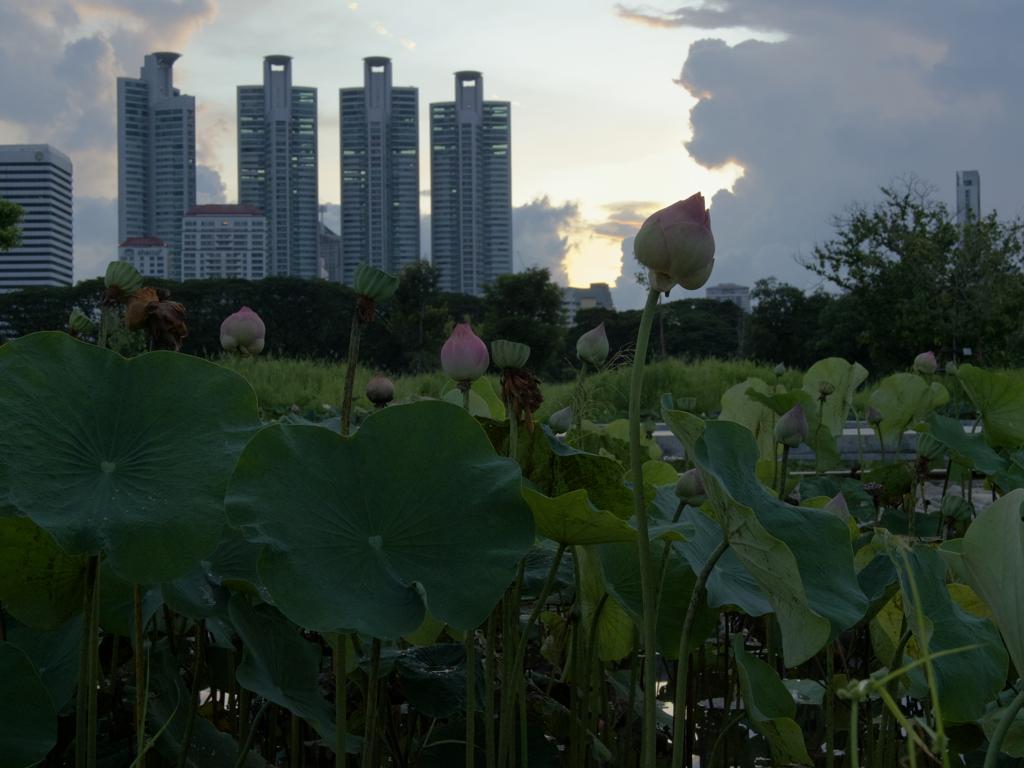 バンコクの夜明け。朝を迎える。4