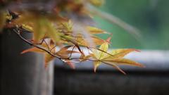 秋の気配②
