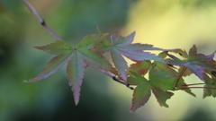 秋の気配①