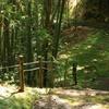 木漏れ日のさんぽ道