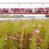 花咲くトラス橋を駆け抜ける
