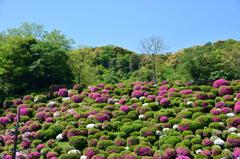 蹴上浄水場に咲く花