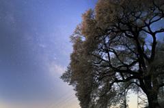 さくら咲く星空