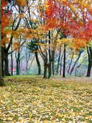 里山の森・秋の『紅演』