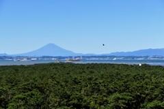 富士・東京湾・岬の松