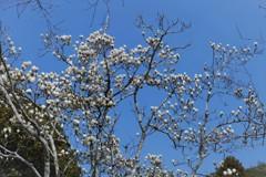 おさきに・・・お咲きにってことですかね(^-^)