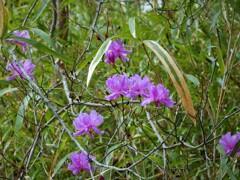 春・さきがけの花