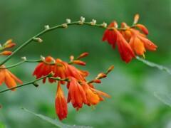 里山の赤い花