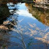 斜光さす池