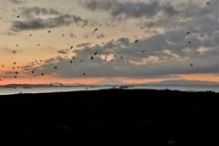 岬の夕景・・・海鳥と富士と