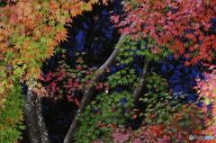共演の秋色