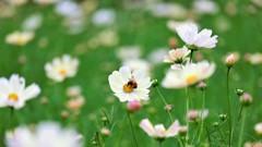 花から花へ・・・