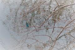 冬・・かわちゃんのいる池
