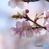 透かし見える春