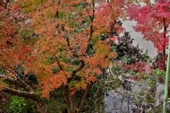 いつもの公園・・・ことしの紅葉
