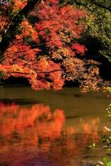 秋・・燃ゆる池